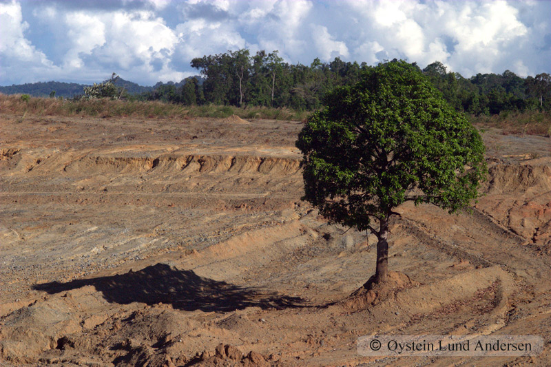 Deforestation dries up the land near the city.