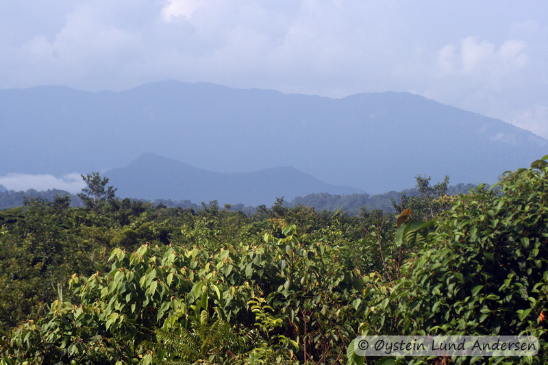 Mountains seen far north from Terablu. The mountains is located near the village of Senggeh. The Lepki people call this mountain Kawinisa/Jee, and is feared for harbouring bad spirits.