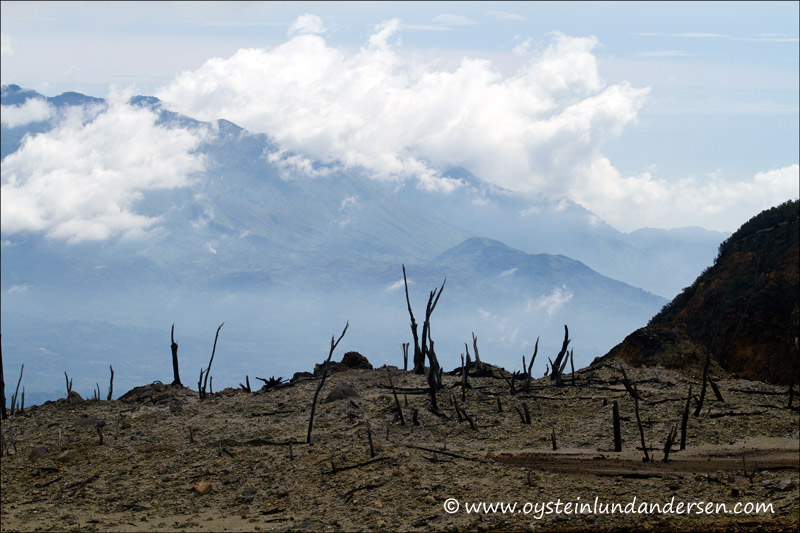 Dead trees and the garut plains in the background.