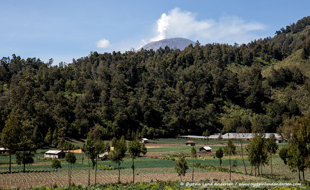 The peak of Semeru seen from Ranu Pani village.
