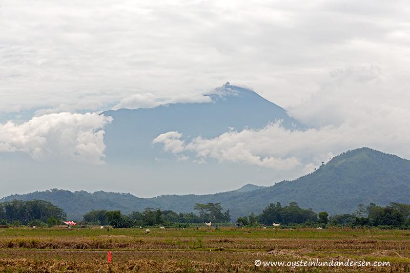 Slamet-volcano-indonesia-April-2014(IMG_4794)