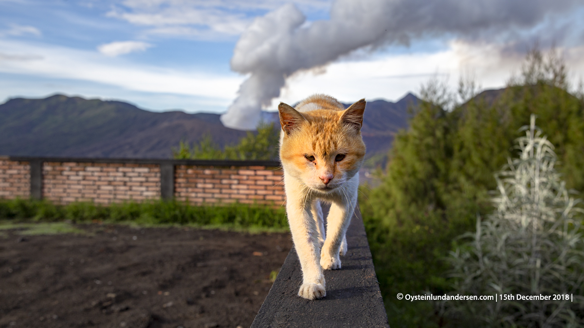 Volcano cat Indonesia