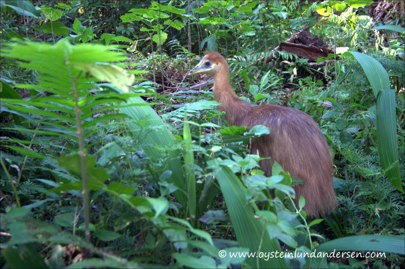 Cassovary bird.(September 2004)