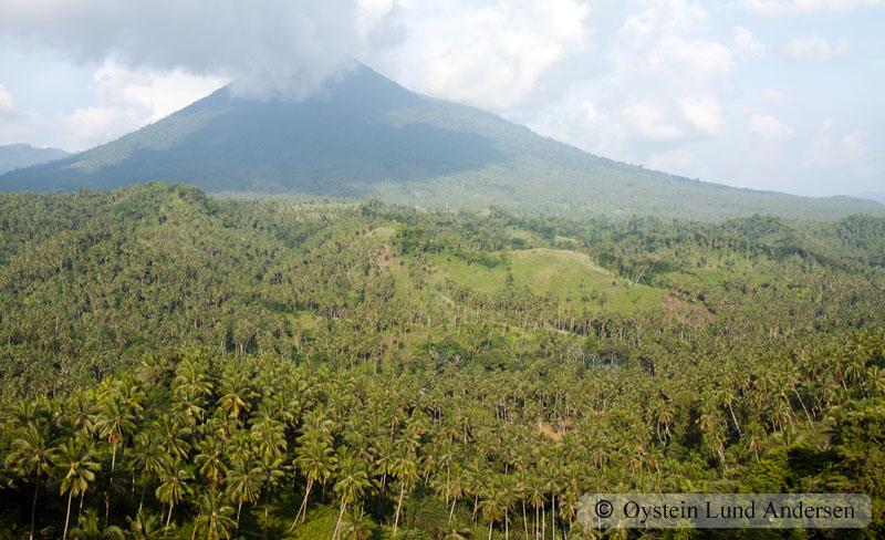 Major coconut plantation on Manado.