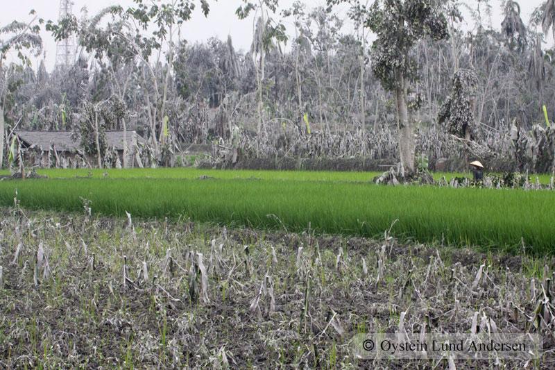 Merapi_OCT-2010x7