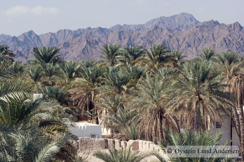 Oman_NizwaX5