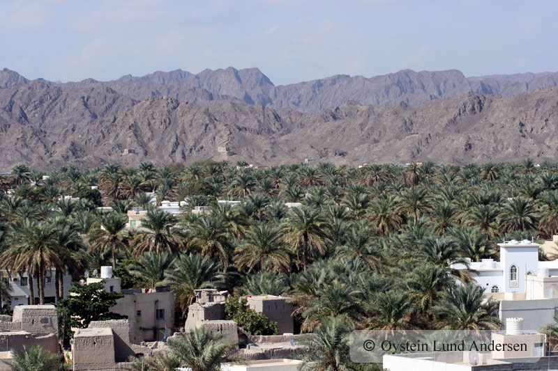 Oman_NizwaX7