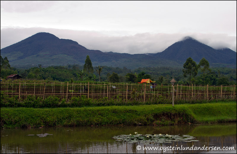 Papandayan seen from from the town of Cisurupan.